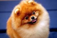 В Ізюмі пройде виставка собак