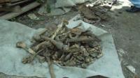 В Ізюмі знайшли останки давніх поховань