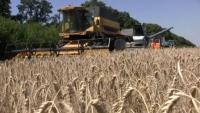 Хід зернозбиральної кампанії на Ізюмщині