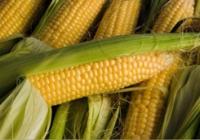 Правоохранители Балаклейщины разоблачили трех мужчин, которые украли из поля более 2 тонн кукурузы