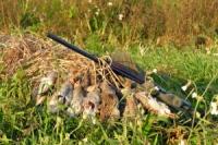 Харьковский облсовет распределил тысячи гектаров охотничьих угодий
