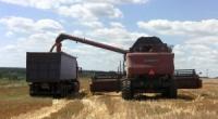 Збирання ранніх зернових та зернобобових на Ізюмщині завершено