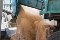 В Харьковской области - рекордный урожай пшеницы