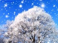 29 грудня: прикмети дня