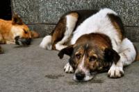 У Лозовій собаки нападають на містян