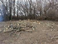 На Ізюмщині продовжується незаконна вирубка лісосмуг