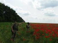 СБУ виявила на Харківщині 120 гектарів незаконного засіву маку.