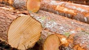 В Славянском районе незаконно рубят лес