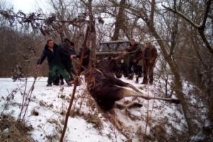 Ізюмський район: рятувальники врятували лося