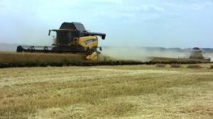 На Ізюмщині триває збирання ранніх зернових