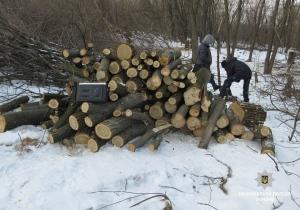 Поліцейські Балаклійщини припинили незаконну порубку дерев