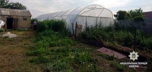 На Ізюмщині дільничні офіцери виявили теплицю з насадженнями коноплі