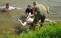 В Україні з початку року втопилися понад 800 осіб!